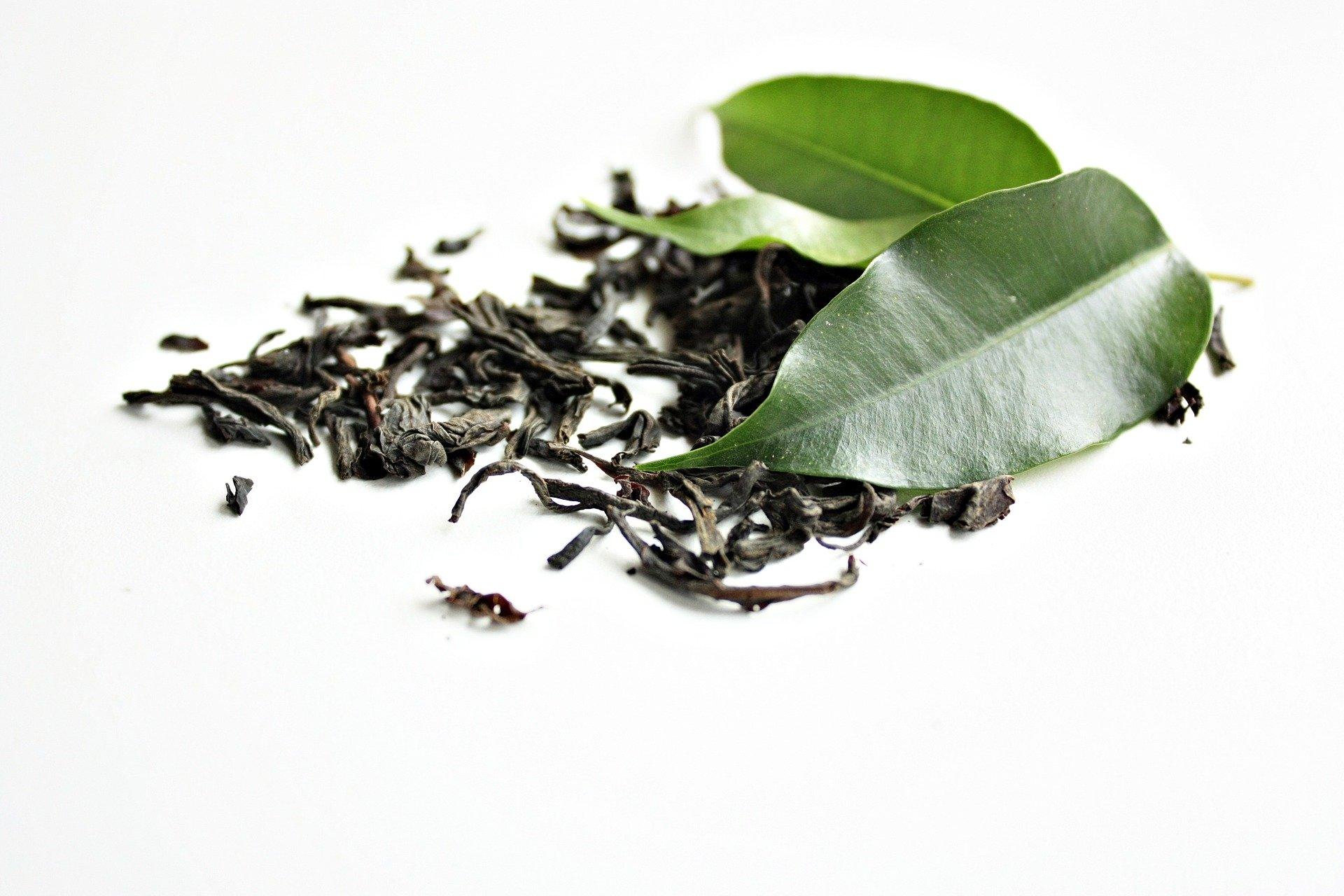 Le thé vert, sa feuille, sa classification, ses propriétés.